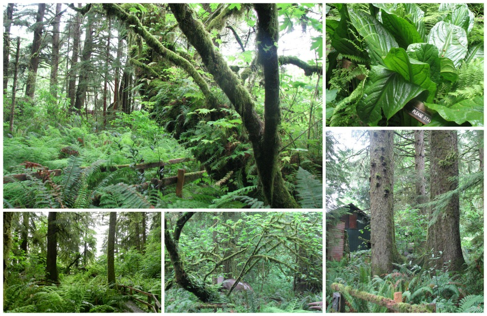 main rainforest collage small