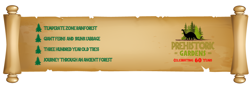 rainforest-page-main-scroll